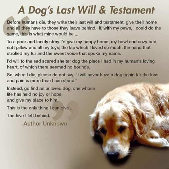 Dog's will